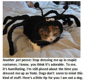 Cat - cat in costume