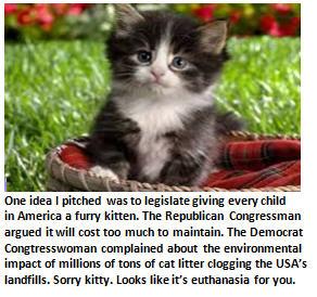 Congress - cute kitty