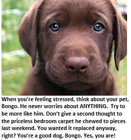 stressed out meditation - Bongo